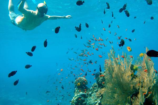 snorkeling surin islands