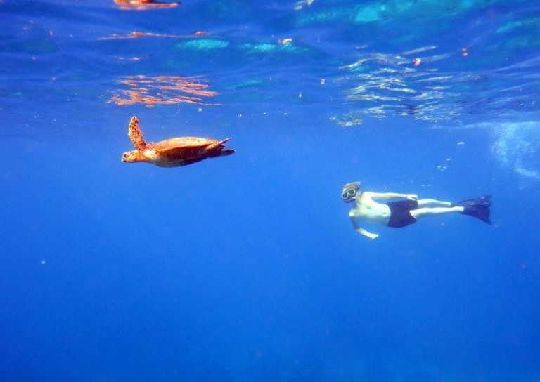 Snorkeling with turtles Surin Islands